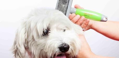 Anwendungstipps Fellpflege